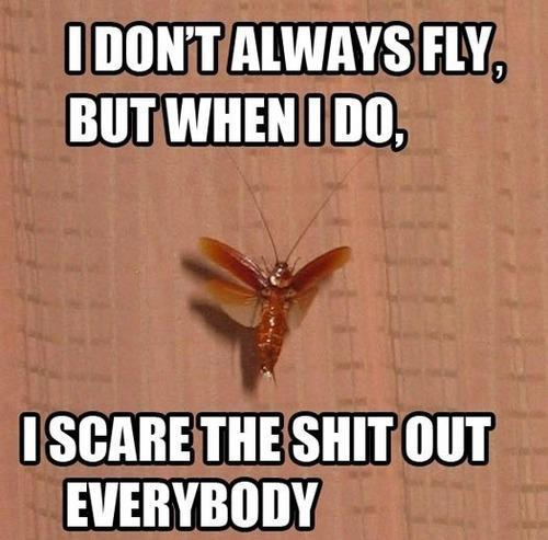 I Dont Always Fly